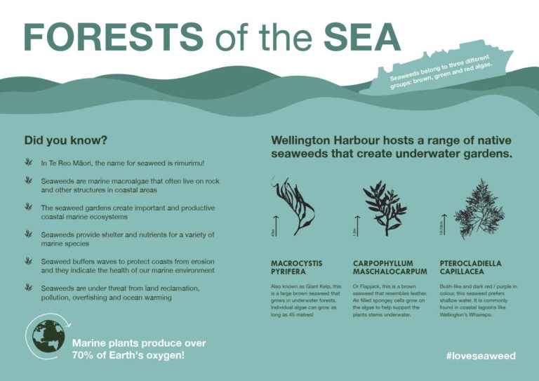 Information sign Forests of the Sea