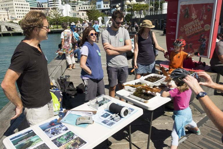 Seaweed Information tables and volunteers